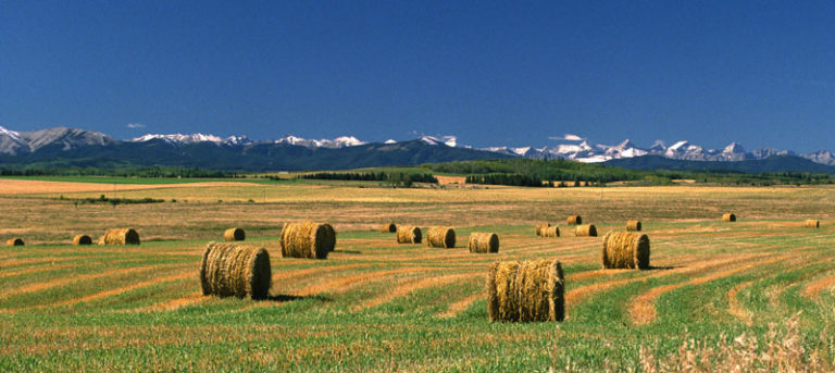 Opportunity lives in Alberta, Canada – The Alberta Rural Physician Action Plan